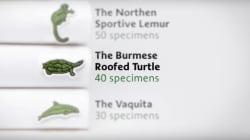 Lacoste change son logo pour sauver les espèces en voie