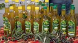 Lancement de la 2e édition du Salon international de l'Olive et de l'huile d'olive à