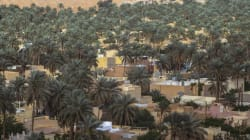 Ghardaïa: Extension de la surface agricole utile à plus de 60.000 ha à l'horizon