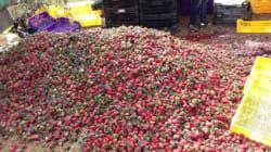Fruits rouges: Les vents violents laissent les agriculteurs sur la