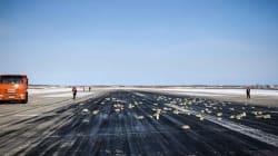 Russie: un avion perd sa cargaison de lingots au