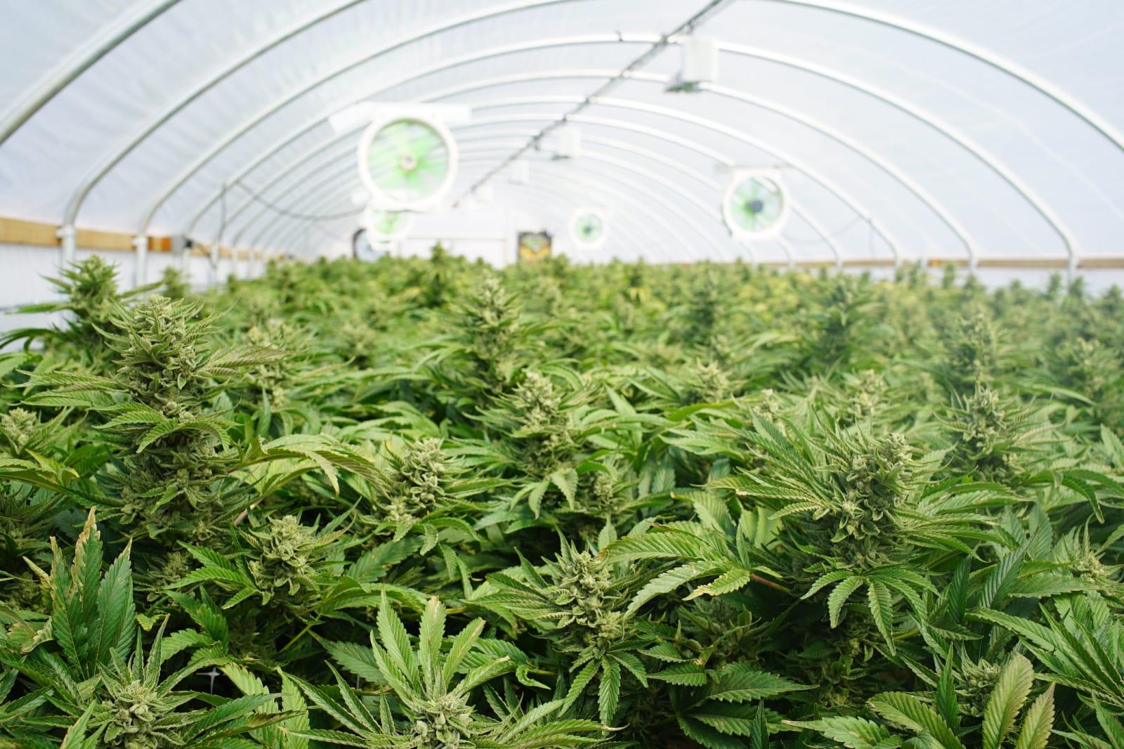nevada site bug leaks medical marijuana applicant data