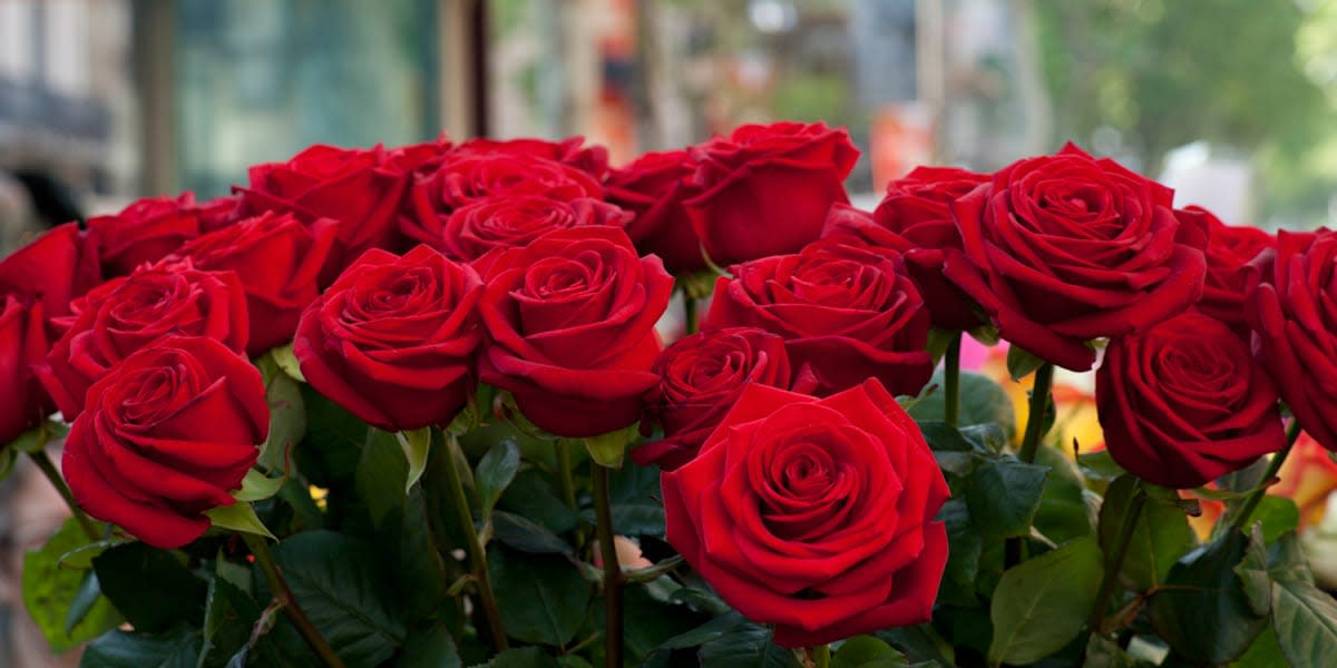 Researchers create working electronics inside a rose