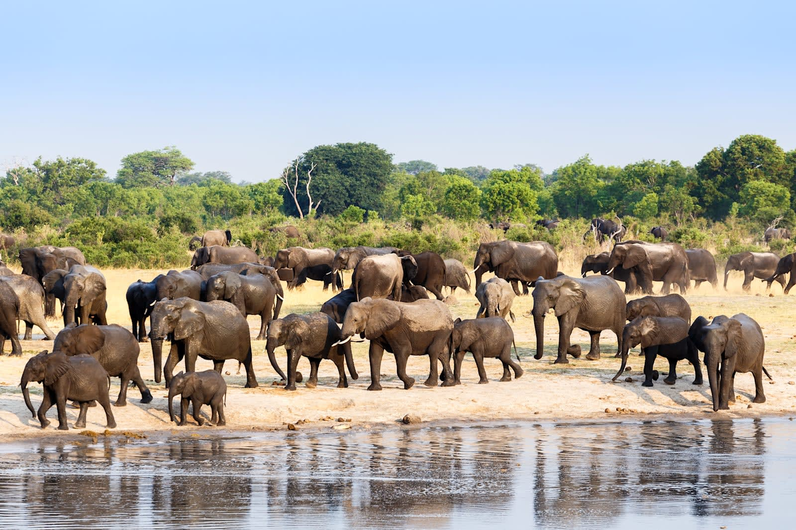 Drones and AI help stop poaching in Africa