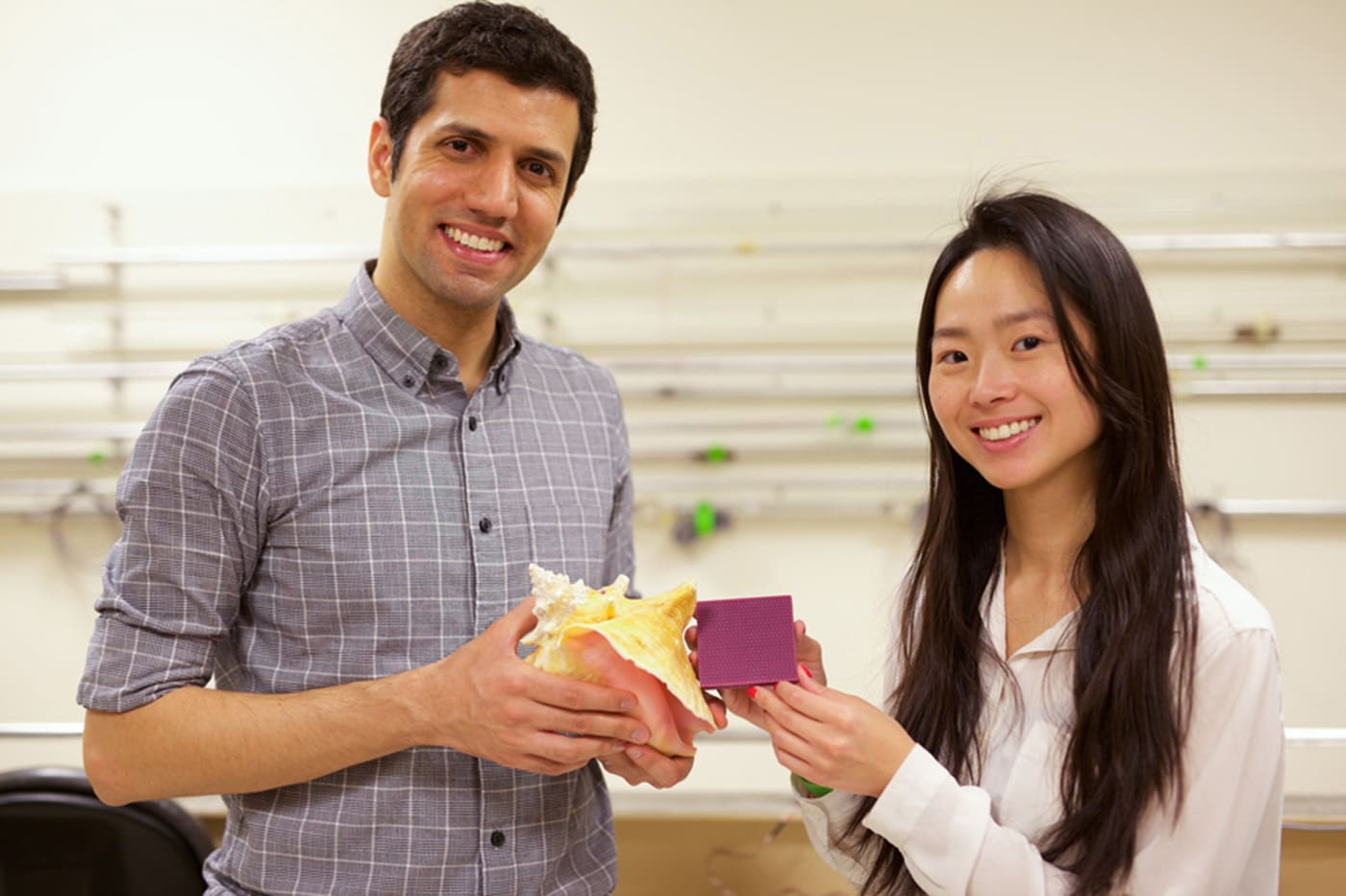 Conch shells hold the secret to impact-resistant armor
