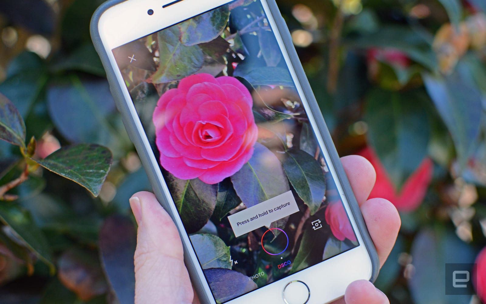 VSCO brings GIFs to its main iPhone app