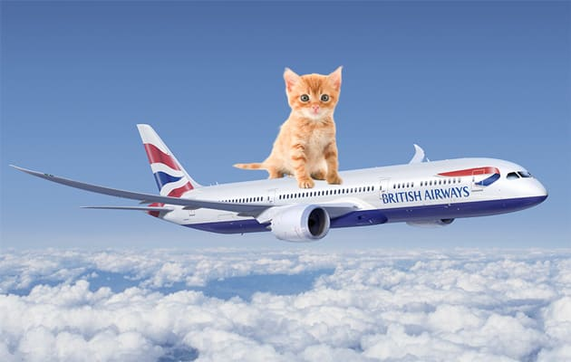 British Airways adding cat videos to its roster of in-flight
