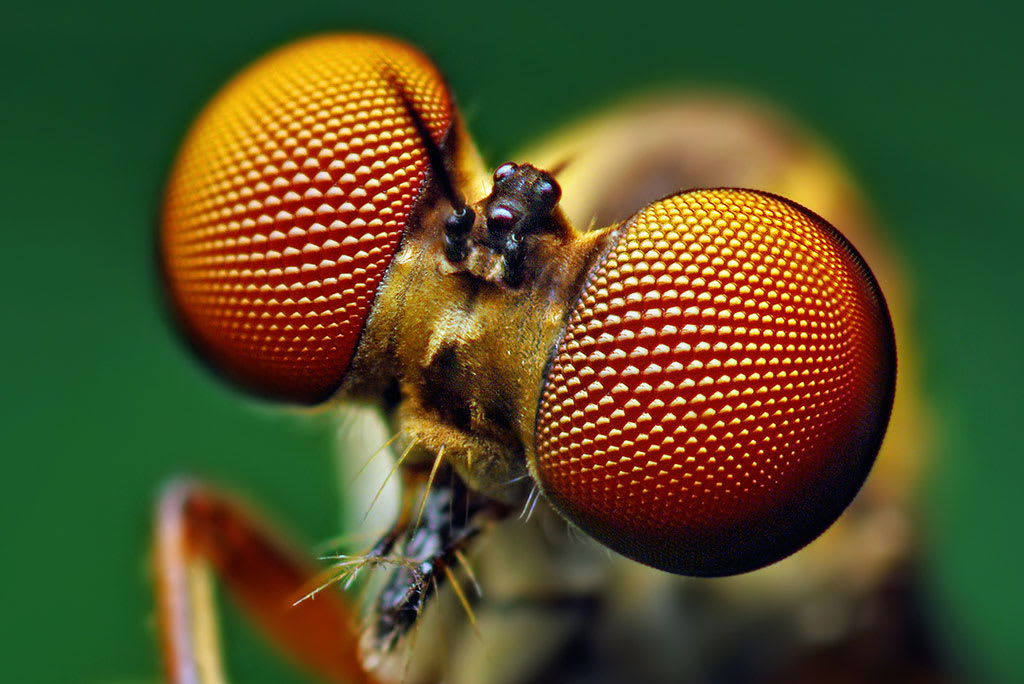 Stanford Toughens Up Cheap Solar Cells By Mimicking Insect