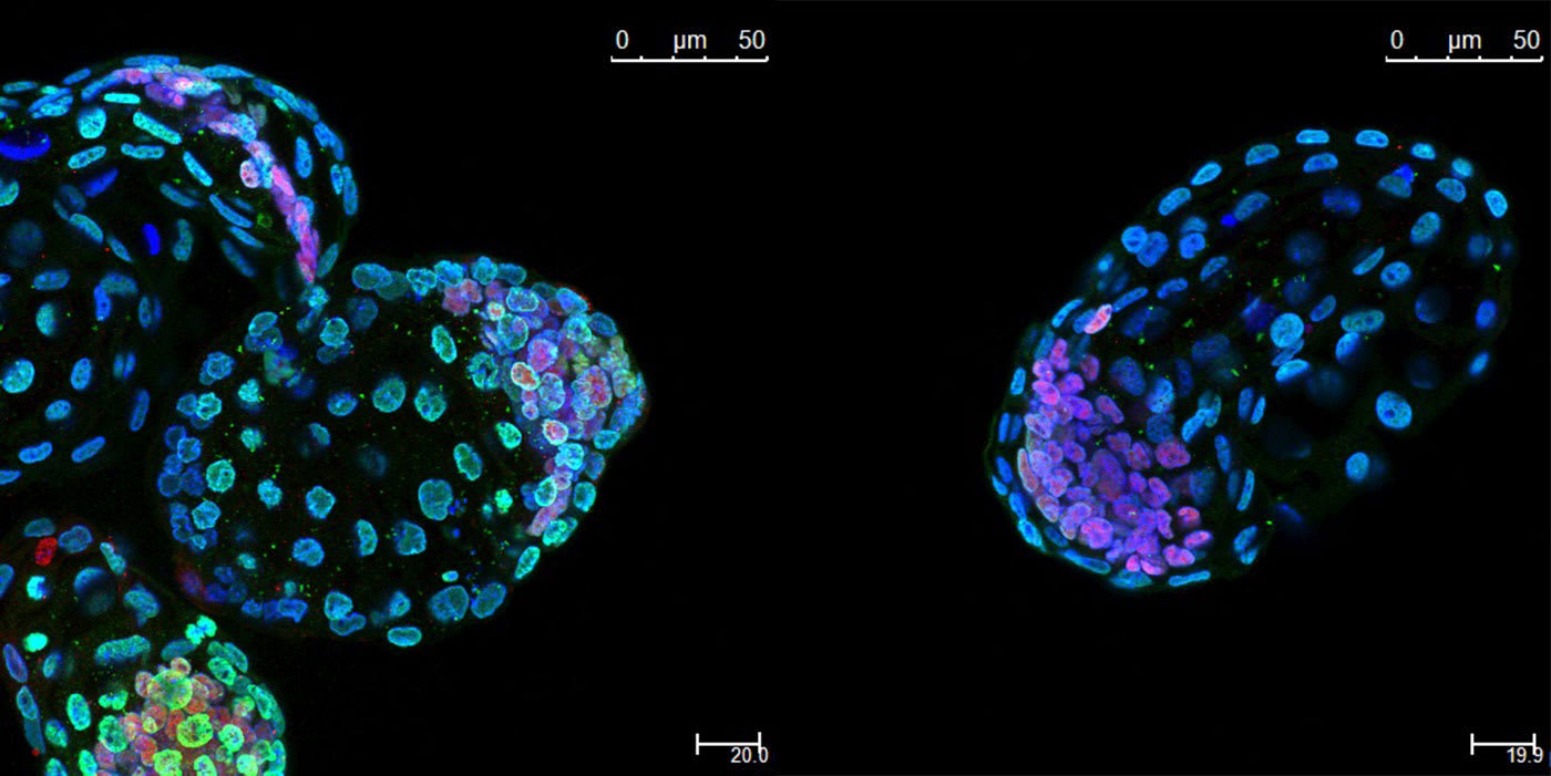 Scientists put mouse embryos in suspended animation for a month