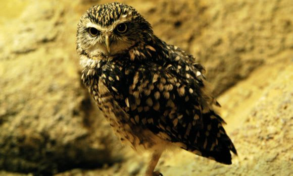 WRUP: Oh no, an owl edition
