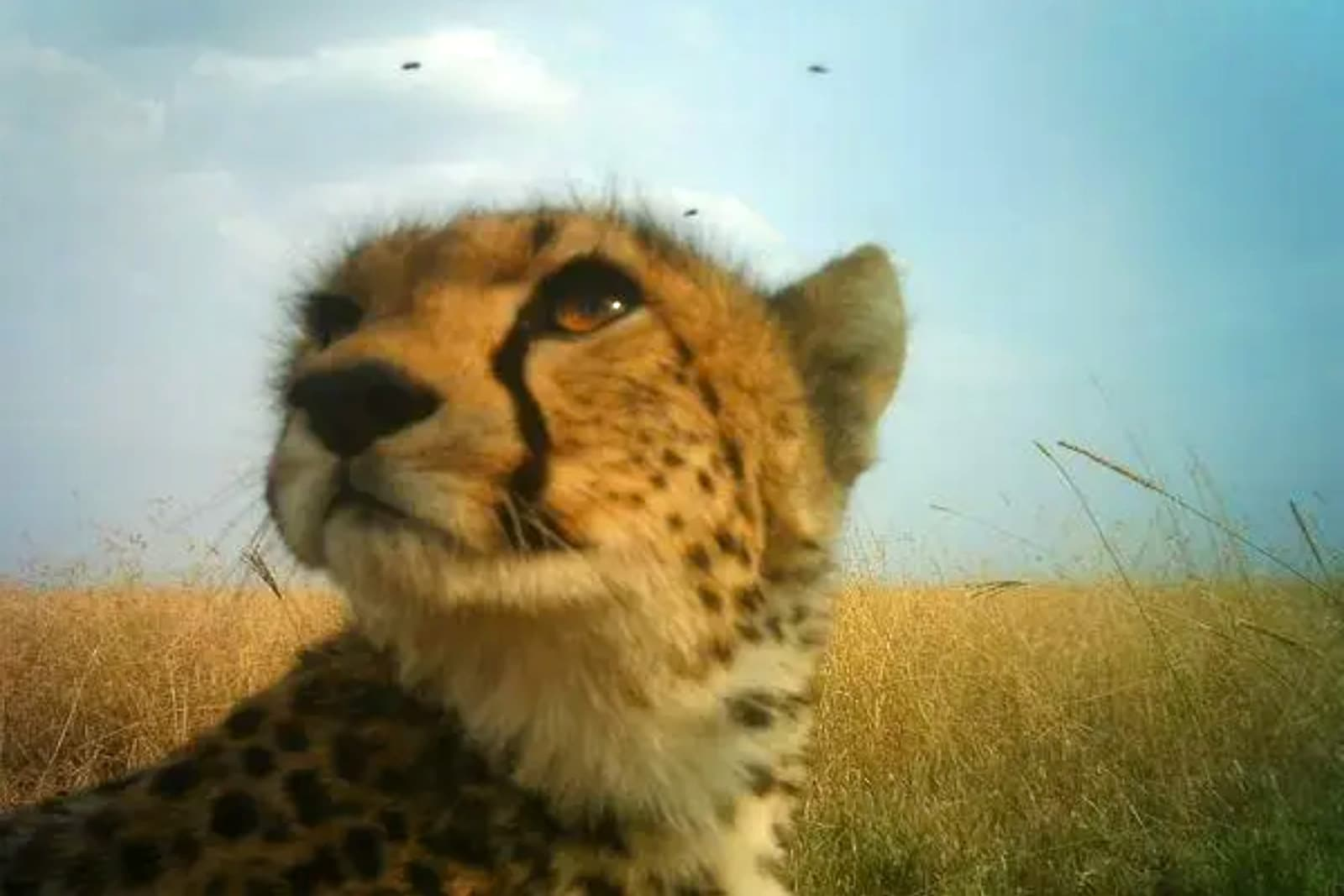 DeepMind uses AI to track Serengeti wildlife with photos