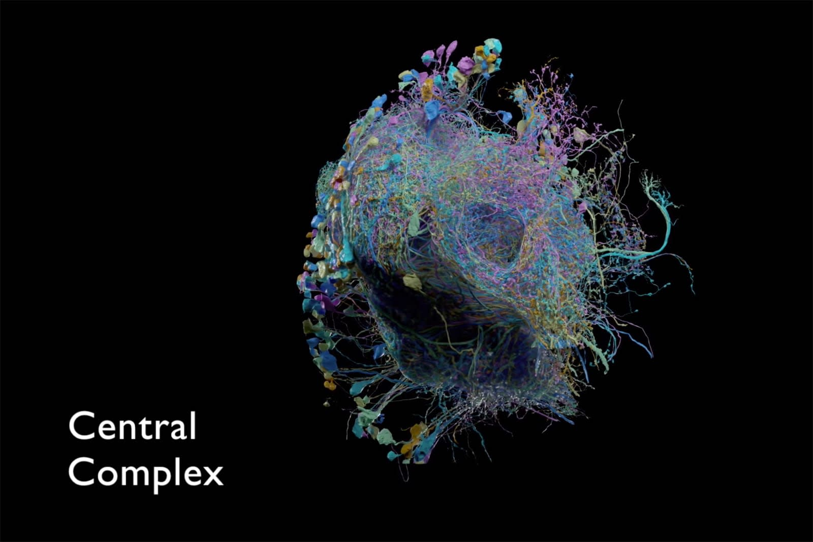 Google helps publish the largest high-res map of brain connectivity