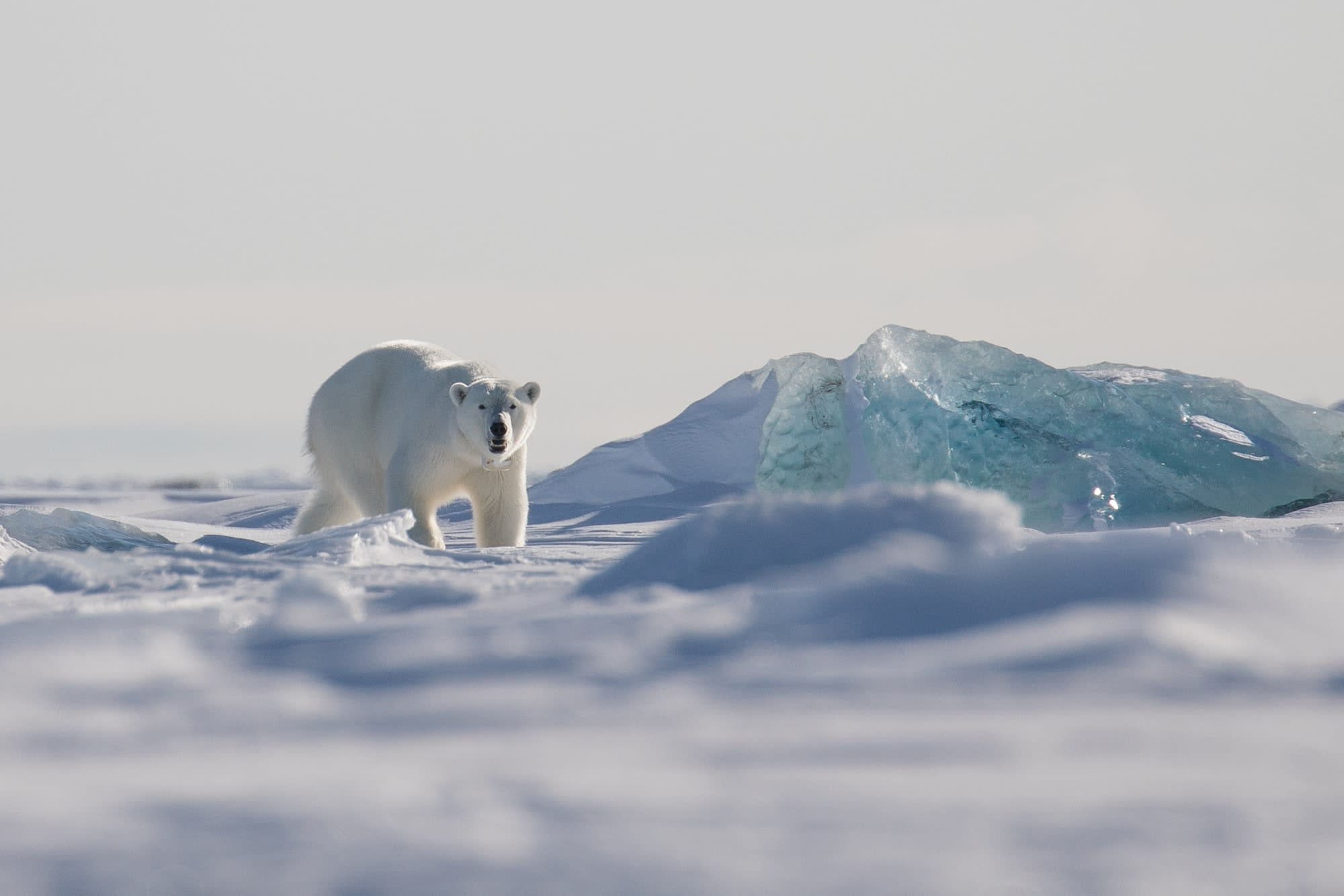 Scientists have even found microplastics in the Arctic