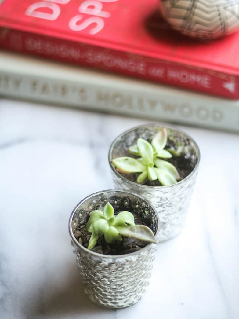 Easy to make DIY mini succulents