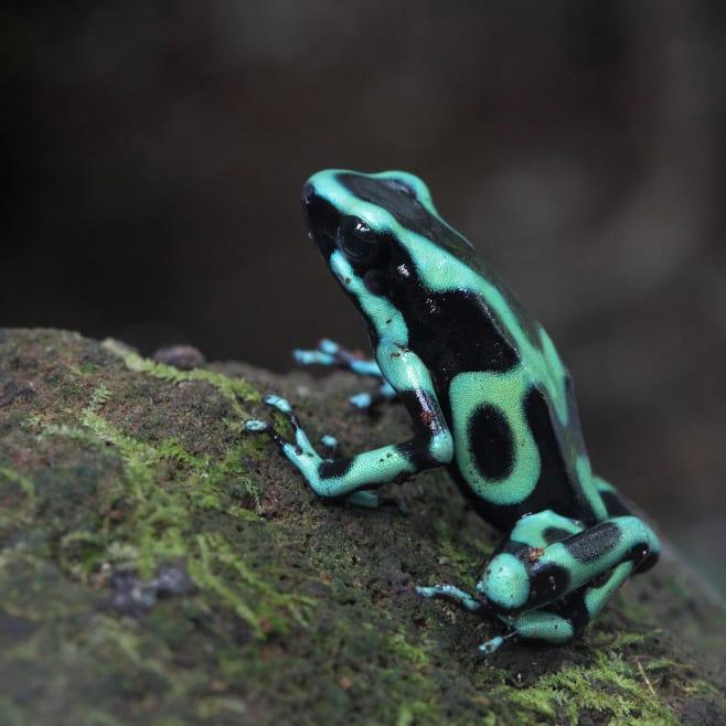 Benvenuti in Costa Rica, il luogo più verde della Terra