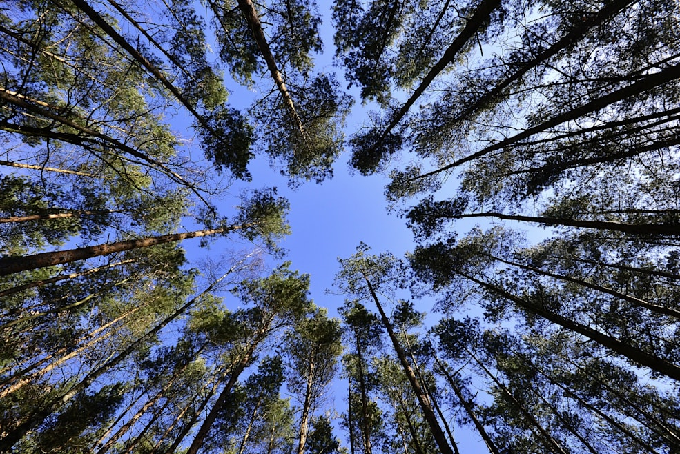 Ecosia, el buscador que planta árboles a golpe de clic