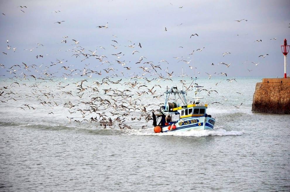 Pesca sostenible: ¿la única alternativa?