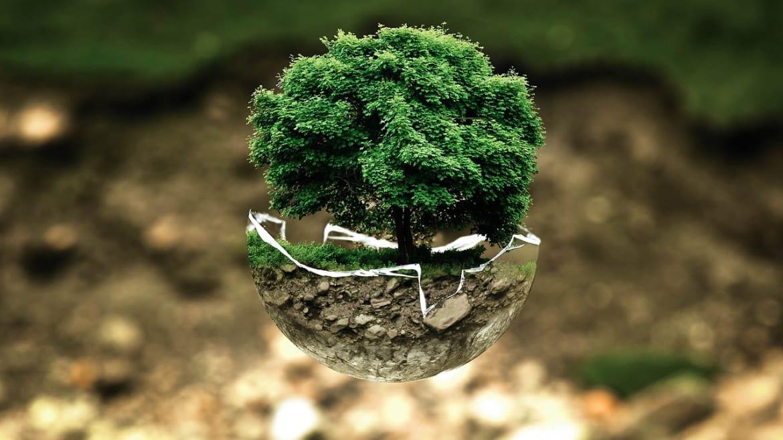 Educación Ambiental: