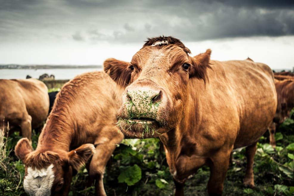 Cómo nuestras elecciones a la hora de comer impactan al medioambiente