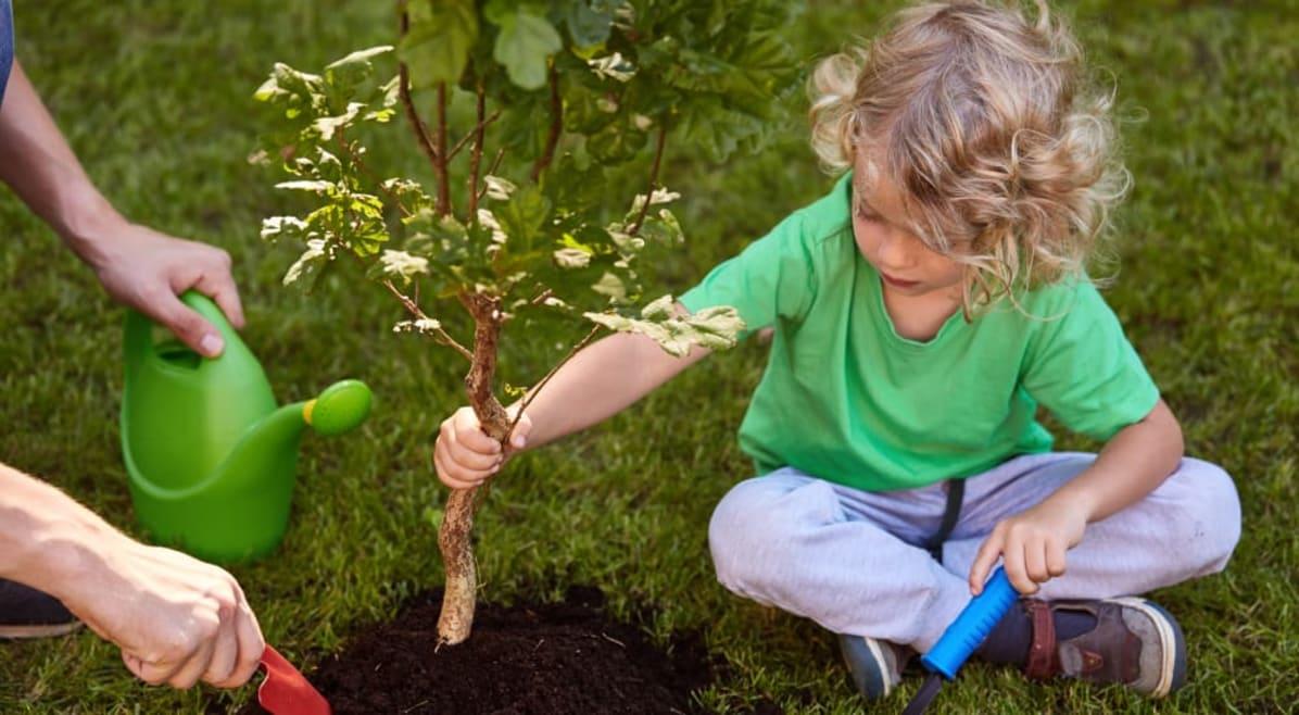 Alberi e orti contro il cambiamento climatico. Così ognuno di noi può fare la differenza