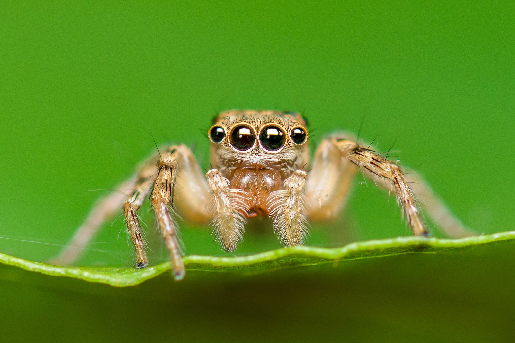 An efficient new depth sensor was inspired by spider eyes | Engadget