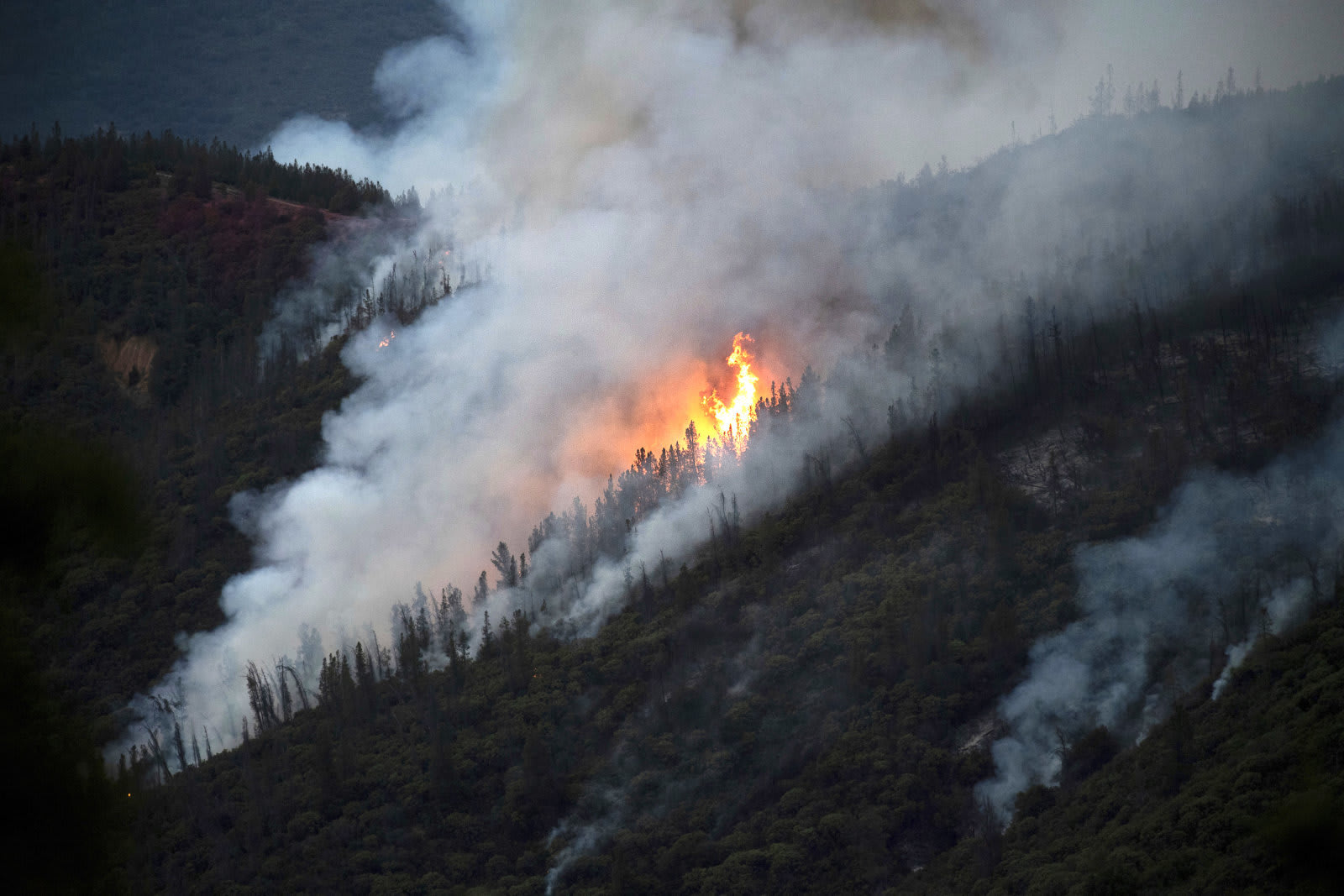 AP Explains Wildfires Ruin and Regeneration