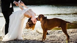 31 Adorable Photos Of Dogs At Weddings