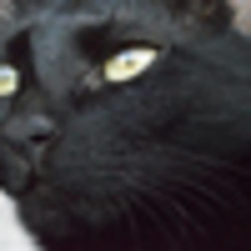 Black cat's gaze