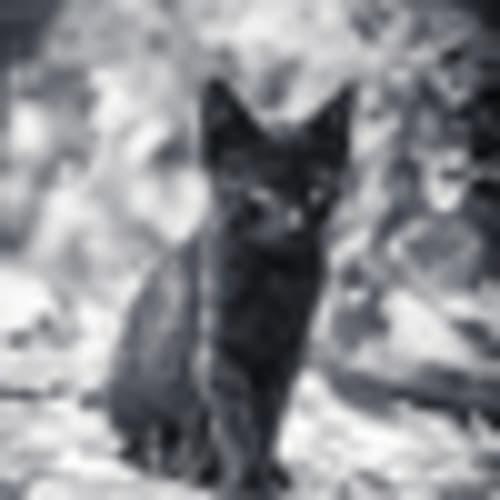 Black cat at the graveyard