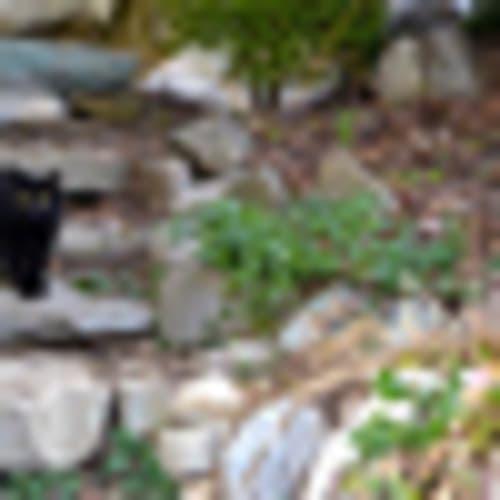 gatto nero in allerta!