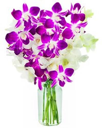 Vogue Purple and White Orchids