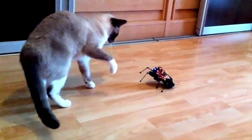 DIY ArduSpider robot battles household pets, beats other homemade gifts