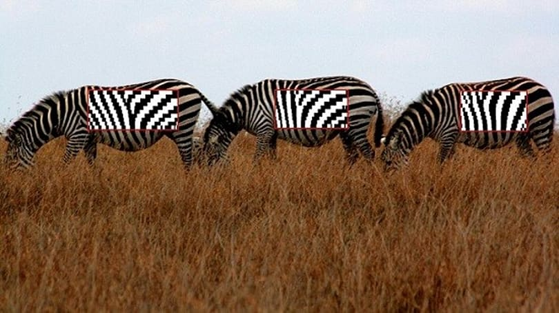 StripeSpotter turns wild zebras into trackable barcodes