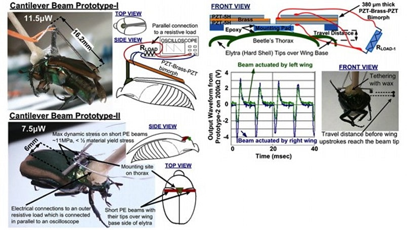 DARPA harvests energy from cyborg beetles to keep them brainwashed