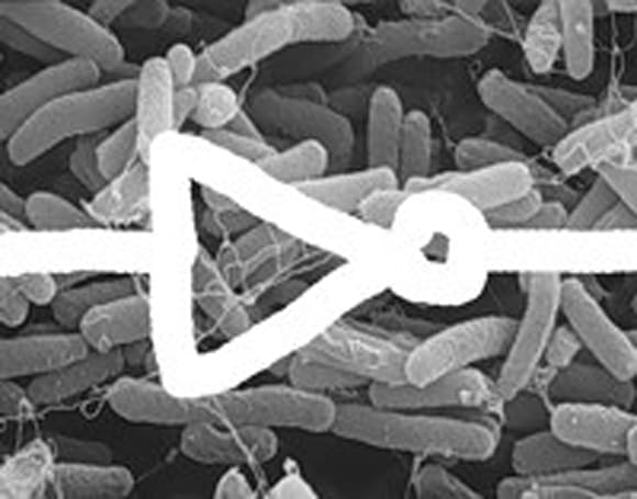 Scientists build logic gates out of gut bacteria, then hopefully wash their hands