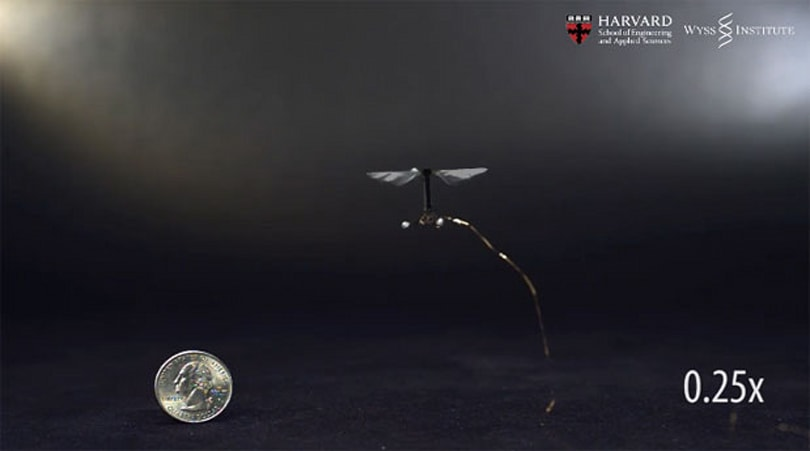 Harvard University's robotic insect takes its first controlled flight (video)