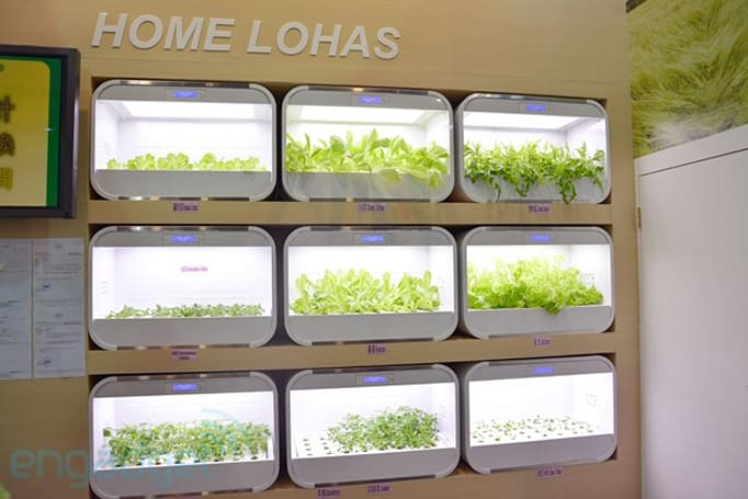 Home Lohas brings hydroponic gardening into your room, rabbit guard not included