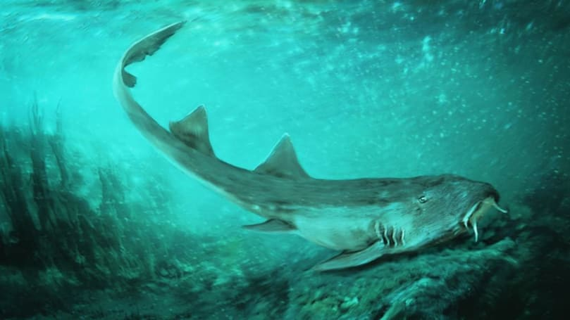 Scientists name ancient shark species after arcade classic 'Galaga'