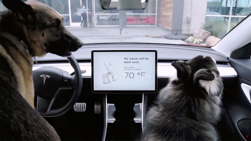 Tesla rolls out fix for Dog Mode overheating bug