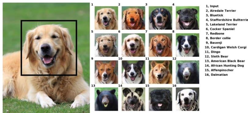 NVIDIA's AI can put your pet's smile on a random animal