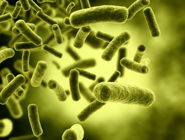 Super-powered bacteria can harness light for fuels and plastics