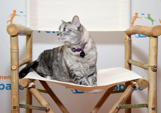 Facebook's original video strategy: Cats + weddings = profit