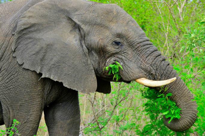 Intel 的 AI 用於加強保護非洲野生動物