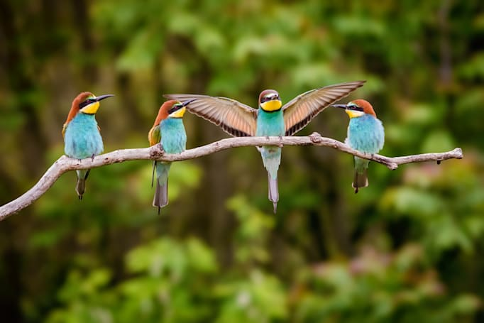 Tech that helped me fall back in love with birdwatching