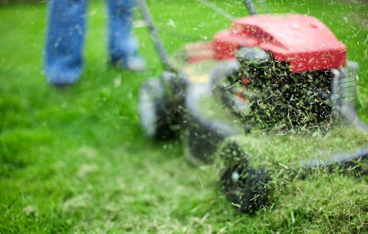 Scientists discover shortcut for turning grass into plane fuel