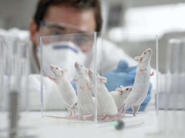 Brain implants help nervous mice find their competitive side