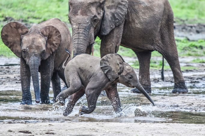 Researchers tap AI in fight against elephant poachers