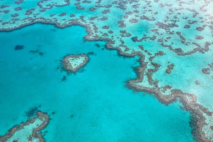 The endangered Great Barrier Reef is not in danger, says UNESCO