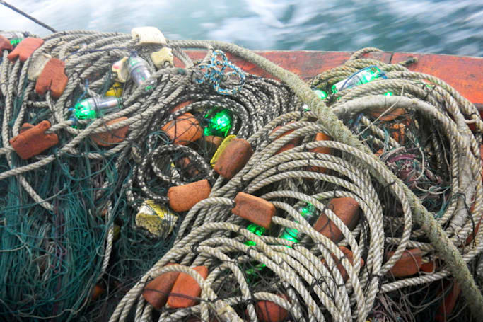 LED-lit fishing nets save sea turtles from getting caught