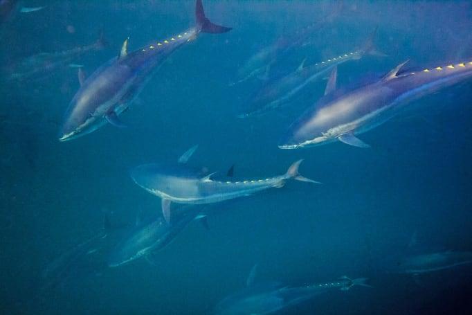 Paul Allen puts $40 million towards combatting illegal fishing